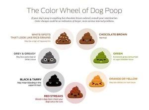 poop-infographic2